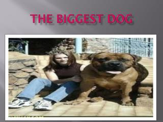 The biggest dog