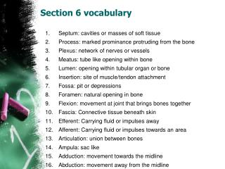 Section 6 vocabulary