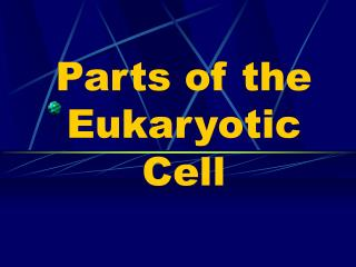 Parts of the Eukaryotic Cell