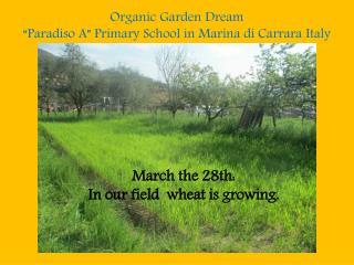 Organic  Garden  Dream �Paradiso A�  Primary  School in Marina di Carrara  Italy