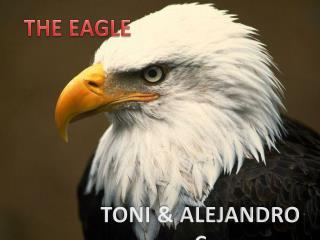 TONI & ALEJANDRO C