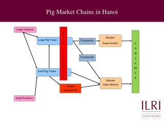 Pig Market Chains in Hanoi