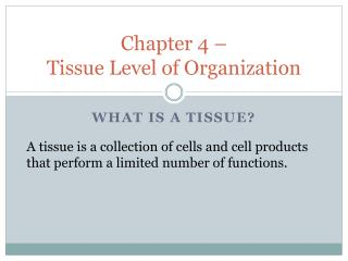 Chapter 4 – Tissue Level of Organization