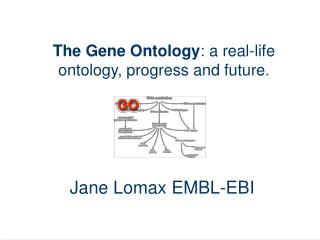 The Gene Ontology : a real-life ontology, progress and future.