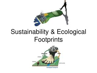 Sustainability & Ecological Footprints