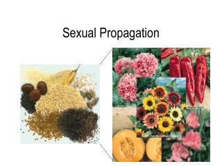 Sexual Propagation