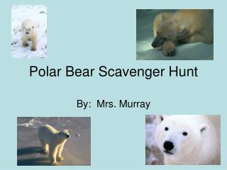 Polar Bear Scavenger Hunt