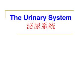 The Urinary System ????