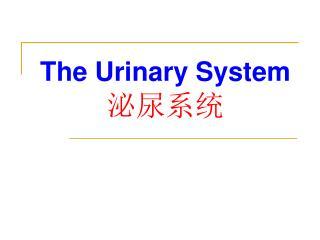 The Urinary System 泌尿系统