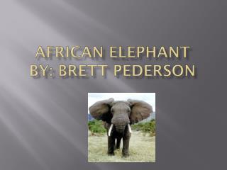 African Elephant By: Brett Pederson