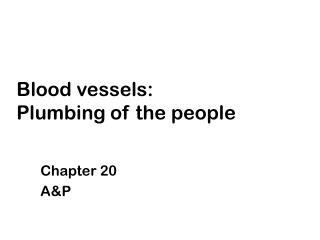 Blood vessels:  Plumbing of the people