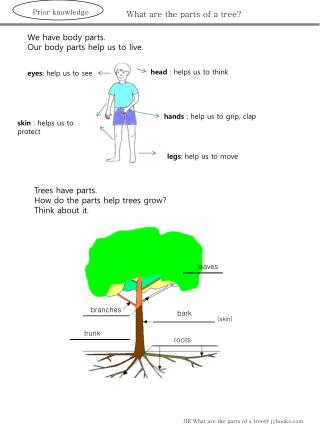 What are the parts of a tree?