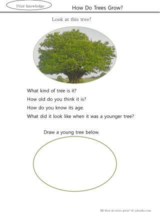 How Do Trees Grow?