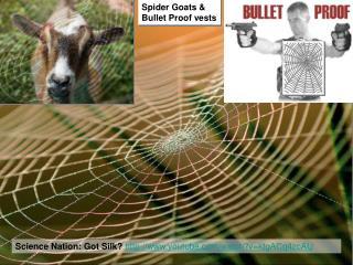 Science Nation: Got Silk? youtube/watch?v=ktgACq4zcAU