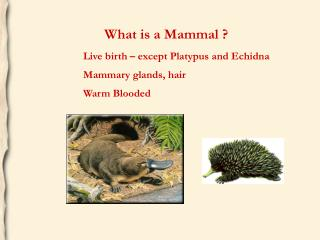 Live birth – except Platypus and Echidna