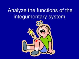 Analyze the functions of the integumentary system.