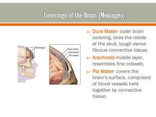 Coverings of the Brain (Meninges)