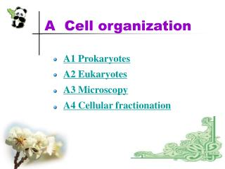 A  Cell organization