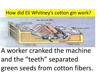 How did Eli Whitney�s cotton gin work?