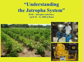"""Understanding  the Jatropha System"" IFAD – Jatropha conference,  April 10 – 11, 2008 in Rome"