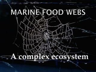 Marine Food Webs