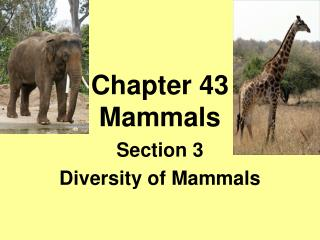 Chapter 43 Mammals