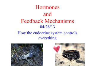 Hormones and Feedback Mechanisms
