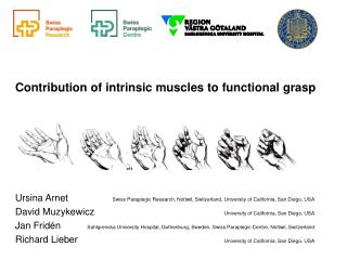 Contribution of intrinsic muscles to functional grasp