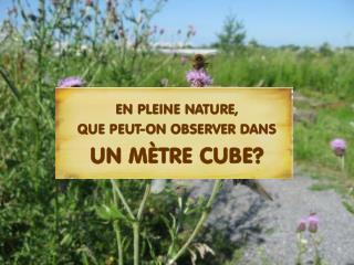EN PLEINE NATURE, QUE PEUT-ON OBSERVER DANS UN MÈTRE CUBE?