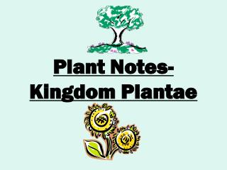 Plant Notes- Kingdom Plantae