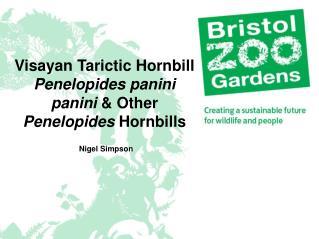 Visayan Tarictic Hornbill  Penelopides panini panini  & Other  Penelopides  Hornbills