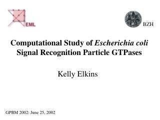 Computational Study of  Escherichia coli Signal Recognition Particle GTPases