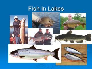 Fish in Lakes
