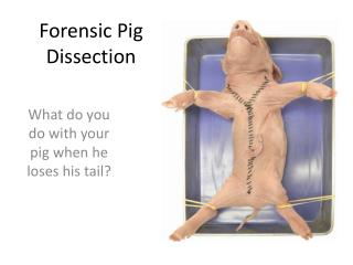 Forensic Pig Dissection