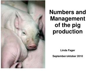 Numbers and Management of the pig production Linda Fager September/oktober 2010