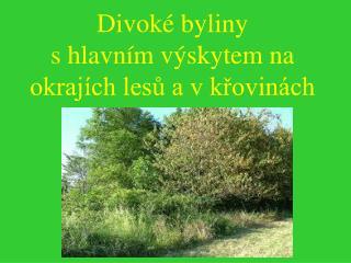 Divoké byliny s hlavním výskytem na okrajích lesů a v křovinách
