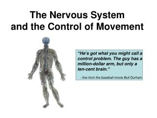 The Nervous System  and the Control of Movement