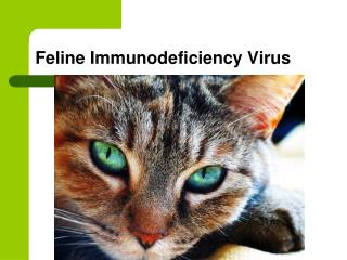 Feline Immunodeficiency Virus