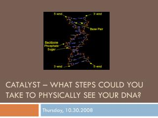 Catalyst – What steps could you take to physically see your  dna ?