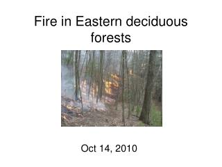 Fire in Eastern deciduous forests