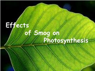 Effects  		of Smog on  				Photosynthesis