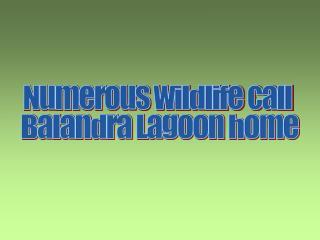 Numerous wildlife call  Balandra Lagoon home