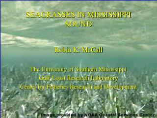 SEAGRASSES IN MISSISSIPPI SOUND