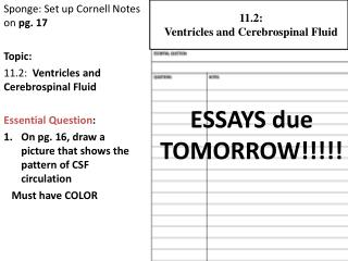 Sponge: Set up Cornell Notes on  pg. 17 Topic:  11.2:  Ventricles and Cerebrospinal Fluid