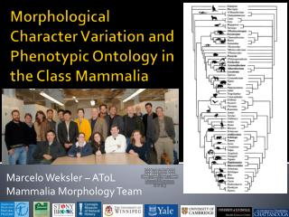 Morphological Character Variation and Phenotypic Ontology in the Class Mammalia