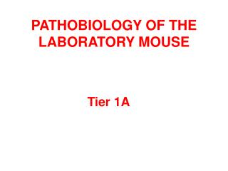 PATHOBIOLOGY OF THE LABORATORY MOUSE