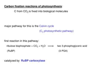 Carbon fixation reactions of photosynthesis : 	C from CO 2  is fixed into biological molecules