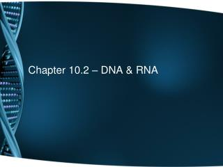 Chapter 10.2 – DNA & RNA