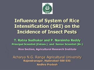 Influence of System of Rice Intensification (SRI) on the Incidence of Insect Pests
