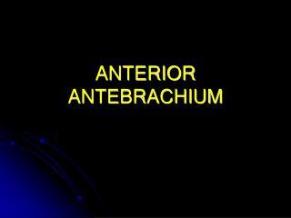 ANTERIOR ANTEBRACHIUM
